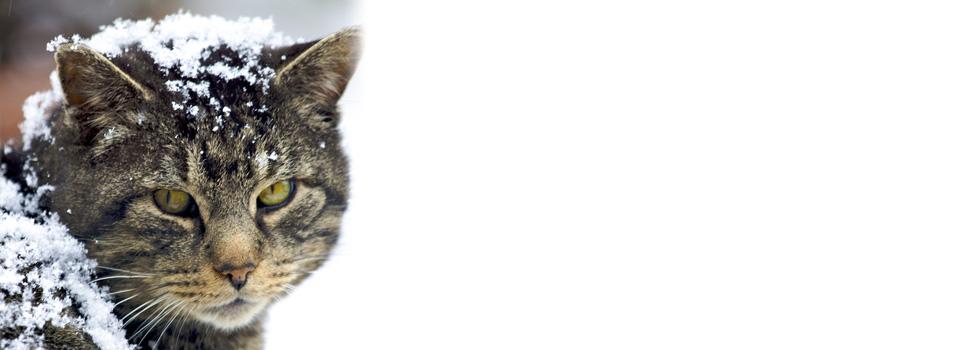 Cat-slider2-ears