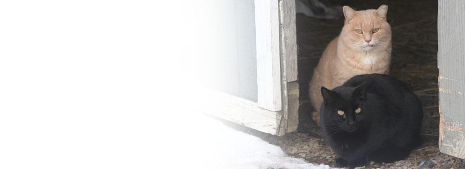 Cat-slider4-barn2