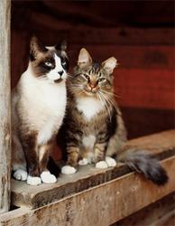 barn-cats1
