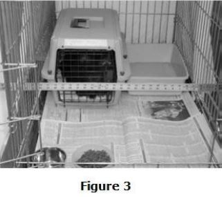 feral-cat-setup-fig3