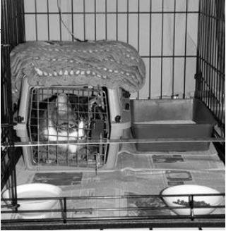 feral-cat-setup1