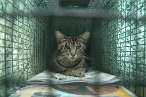 feral-cat-trapping1
