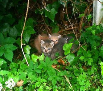 feral-kittens1