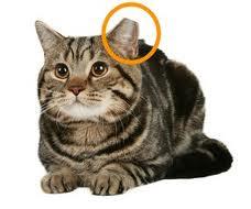 left-ear-tip1